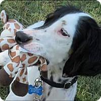 Adopt A Pet :: MISSY - Pine Grove, PA