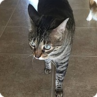 Adopt A Pet :: Rose - Lithia, FL