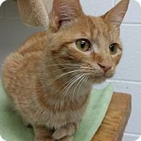 Adopt A Pet :: Doodle - Huntsville, AL