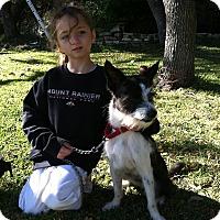 Adopt A Pet :: Aislee - Boerne, TX