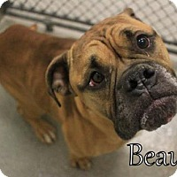 Adopt A Pet :: Beau (Lonely Heart) (Foster Hero Needed URI) - Gulfport, MS
