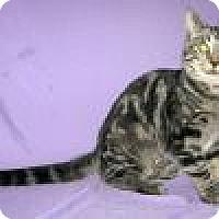 Adopt A Pet :: Kira - Powell, OH