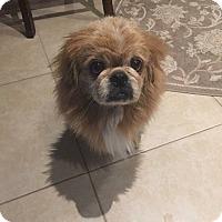 Adopt A Pet :: Leo - Deltona, FL