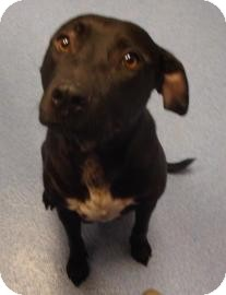 Labrador Retriever Mix Dog for adoption in Gainesville, Florida - Season