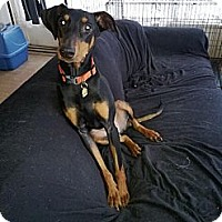 Adopt A Pet :: Athena--adopted!! - New Richmond, OH