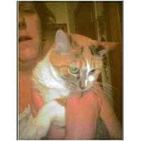Adopt A Pet :: Trixie - Owasso, OK
