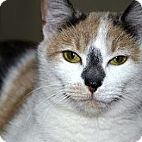 Adopt A Pet :: Emmie - Xenia, OH