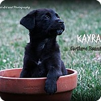 Adopt A Pet :: Kayra - Southington, CT