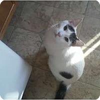 Adopt A Pet :: Felix - Westfield, MA