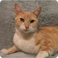 Adopt A Pet :: Sylvia - Jenkintown, PA