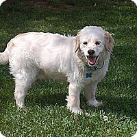 Adopt A Pet :: Boomer - Raritan, NJ