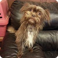 Adopt A Pet :: Sophie - Seneca, SC