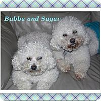 Adopt A Pet :: Bubba & Sugar - OK - Tulsa, OK