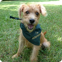 Adopt A Pet :: Hopper - Mocksville, NC