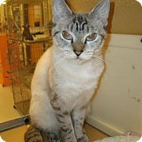 Adopt A Pet :: Snow - Jackson, NJ