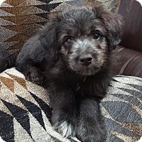 Adopt A Pet :: Amy Poehler - Jersey City, NJ