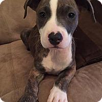 Adopt A Pet :: Angelina - Mayer, MN