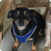 Adopt A Pet :: Benjamin - Ocean Ridge, FL