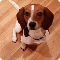 Adopt A Pet :: Sutherland - Alpharetta, GA