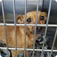 Adopt A Pet :: S/C Donnie - Miami, FL