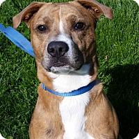 Adopt A Pet :: Fletcher - Grayslake, IL