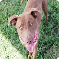 Adopt A Pet :: Patience - Fort Collins, CO