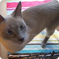 Adopt A Pet :: Tiki - Berkeley Hts, NJ