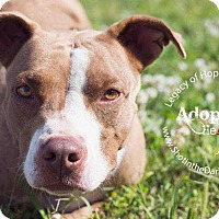 Adopt A Pet :: Diddy - Broken Arrow, OK