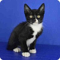 Adopt A Pet :: A025913 - Norman, OK
