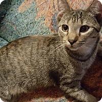 Adopt A Pet :: Lula - Smithfield, NC