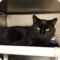 Adopt A Pet :: Mason - Middletown, CT