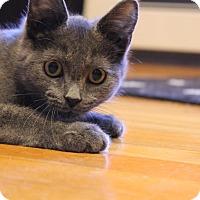 Adopt A Pet :: Mouse - Rochester Hills, MI