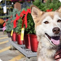 Adopt A Pet :: Tesla - Roswell, GA