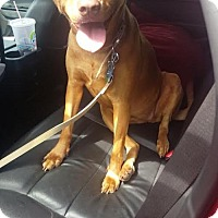 Adopt A Pet :: Anna (courtesy listing) - Spotsylvania, VA