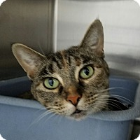 Adopt A Pet :: Baby Girl - Elyria, OH
