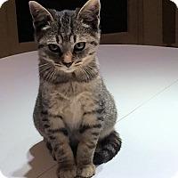 Adopt A Pet :: Heath - Rocky Hill, CT