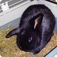 Adopt A Pet :: Charli - Woburn, MA