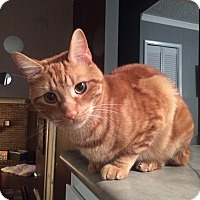 Adopt A Pet :: Sully - Columbus, OH
