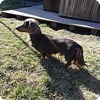 Adopt A Pet :: MR. WEINER - Portland, OR