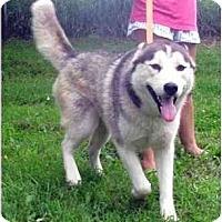 Adopt A Pet :: Burton - Belleville, MI