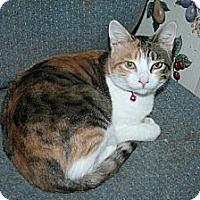 Adopt A Pet :: Charlotte - Santa Rosa, CA