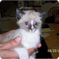 Adopt A Pet :: Bailey - Island Park, NY