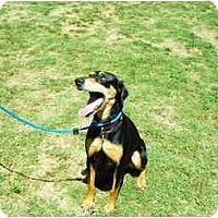 Adopt A Pet :: Layla - Santee, CA