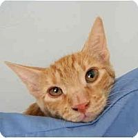 Adopt A Pet :: Tango - Modesto, CA