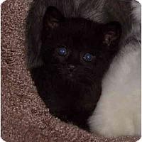 Adopt A Pet :: Tater Tot - Davis, CA