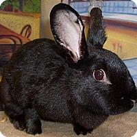 Adopt A Pet :: Lucky Lucy - Foster, RI