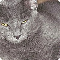 Adopt A Pet :: Sasha - Oxford, CT