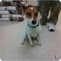 Adopt A Pet :: Foster - Omaha, NE