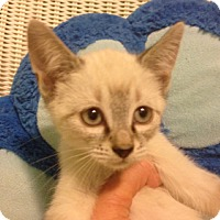 Adopt A Pet :: Dion - Oyster Bay, NY