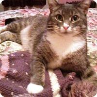 Adopt A Pet :: Green Eyed Moo Shu'15 - New York, NY